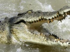 Cá sấu lao lên thuyền, du khách la hét
