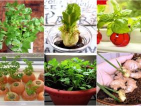 10 loại rau trồng kiểu