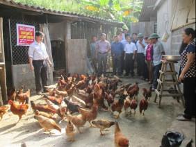 Bí quyết để nuôi gà hiệu quả cao từ giun quế