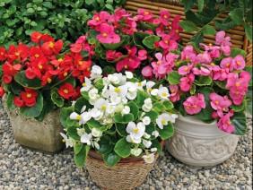 Yếu tố quyết định sự sống cho vườn cây hoa cảnh: Cách bón phân
