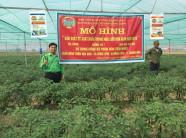 """Mô hình trồng ớt tại huyện Nông Cống đạt hiệu quả cao nhờ sử dụng đồng bộ phân bón NPK.Si – Vì Nông dân Việt"""""""