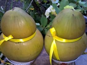 Nông dân tạo hình dừa hồ lô bán giá cao ngất ngưỡng