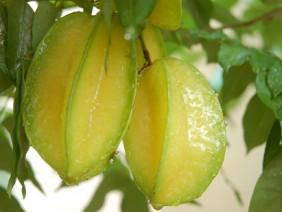 """6 trái cây luôn có sẵn ngoài chợ """"cao tay"""" giảm đường huyết, tốt cho cả người tiểu đường"""