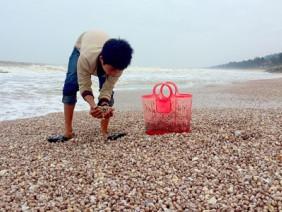 Sò lông dạt trắng bờ biển Hà Tĩnh
