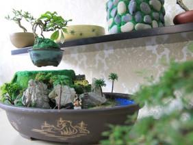 Bonsai tiền triệu bay lơ lửng trên không ở Sài Gòn