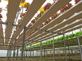 """Vào xem """"vườn rau trên không"""" thu về hàng tỷ mỗi năm"""