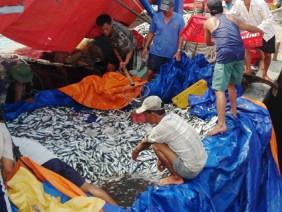 Ngư dân hò reo bỏ neo những con tàu đầy ắp cá, tôm, mực, ghẹ...