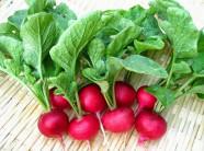 Trồng củ cải đỏ với những chiếc chậu nhỏ đáng yêu