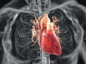 Điều gì xảy ra khi tim người ngừng đập?