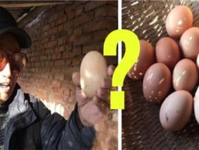 Bất ngờ phát hiện quả trứng gà 'khổng lồ' to tới 20cm, đập ra bên trong là cảnh tượng vô cùng hy hữu này