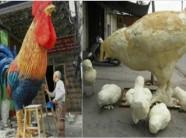 Mô hình gà lạ tại Hải Phòng khiến dân mạng xôn xao