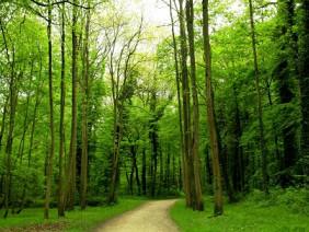 Biến rác thải nhựa thành giải pháp cứu cây xanh