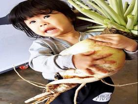 """Củ cải """"khủng"""" nặng 5,5kg siêu hiếm ở Lâm Đồng"""