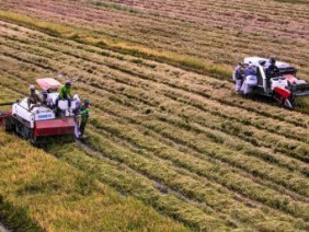 Festival quốc tế nông nghiệp vùng đồng bằng sông Cửu Long