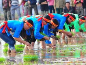 Ngày hội xuống đồng: Ngắm nữ nông dân thi cấy lúa nhanh, đều, đẹp