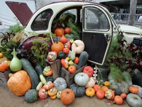 Ghé thăm chợ nông sản lâu đời nhất thế giới ở Úc