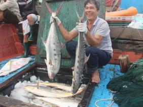Bắt được mẻ cá lớn chưa từng thấy, ngư dân kiếm 5 tỷ trong 2 ngày