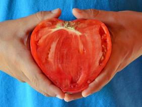 """Trồng cà chua hình trái tim với """"người ấy"""" để... tình yêu thăng hoa"""