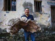 Choáng với cây nấm linh chi khổng lồ mới phát hiện ở TQ