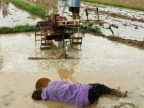Bức ảnh người cha gục chết giữa thửa ruộng đang cày vì kiệt sức khiến cộng đồng mạng rơi lệ