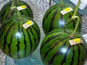 Dưa hấu Quảng Ngãi chín thối, sao vẫn ham mua dưa Nhật giá 2 triệu?