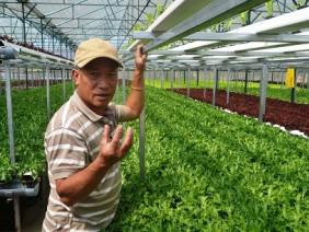 CỰC ĐỘC: Trồng rau 2 tầng không cần đất, năng suất tăng gấp đôi