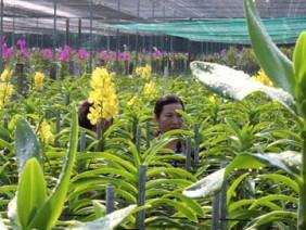 Ngắm vườn lan tưới phun sương hiện đại bậc nhất ở Sài Gòn