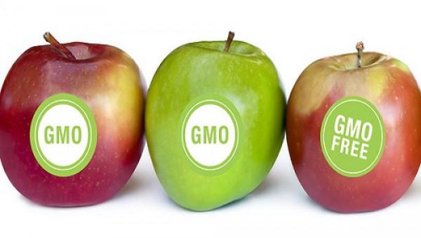 Táo và khoai tây biến đổi gen đã được chấp nhận thương mại hóa
