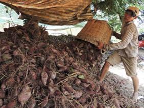 Dùng binh pháp Tôn Tử khi XK nông sản sang Trung Quốc: Biết người, biết ta