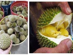 Hoang mang về giống sầu riêng lạ bán đầy trên mạng