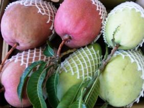 Tại sao phải ăn thực phẩm bẩn: Sạch chỉ để cho người nước ngoài ăn?