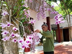 Lão nông xứ Tuyên 20 năm gây dựng vườn lan cổ tích chỉ để...chơi