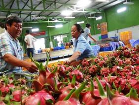 Chi 8.500 tỷ nhập trái cây: Mua về không ăn, tái xuất đi Trung Quốc