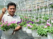 Thôi việc công ty ngoại, về trồng hoa giỏ, bỏ túi chục triệu/tháng