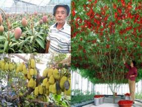 Những siêu cây 'mắn' nhất thế giới, thu hoạch chắc mỏi rụng rời tay!