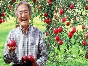 Định tự tử vì 6 năm vườn táo không chịu ra quả, người đàn ông phát hiện bí mật 'trái táo thần kỳ'