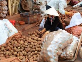 Đà Lạt phải nhập 100 tấn khoai tây Trung Quốc vì khan hàng