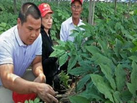 Nông dân Việt Nam sẽ trồng 40 loại dược liệu Hàn Quốc