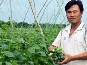 """Cách trồng hay: Đất mặn """"khó nhằn"""", rau màu vẫn xanh, kiếm nhanh 200 triệu"""