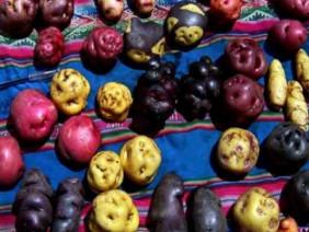 Vén màn bí mật màu sắc tím, đỏ, xanh, đen... của các loại khoai tây