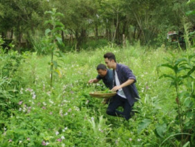 Cánh đồng dược liệu thuận tự nhiên trên đất đỏ Tây Nguyên