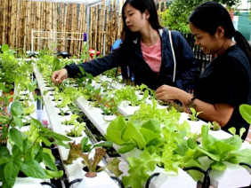 Cô giáo 8x trồng rau- cà phê công nghệ Israel có 1-0-2 ở Tây Nguyên