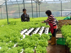 Công nghệ tự động hóa sẽ thay lao động nông nghiệp trong tương lai