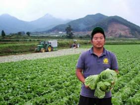 Làng nghèo nhất Nhật Bản thay đổi thần kỳ nhờ cây xà lách