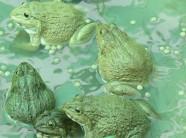 LẠ MÀ HAY: Ếch ngồi trên, cá trê bơi ở dưới, 3 tháng lãi 35 triệu