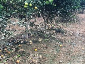 Thanh Hóa: Xót xa nhiều trang trại 10 tỷ đồng bị lũ cuốn phăng