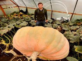 Choáng: Không thể tin nổi quả bí ngô khổng lồ nặng tới gần 1 tấn!