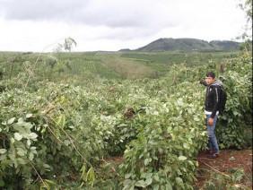 Gia Lai: Hàng chục ngàn trụ tiêu bị quật ngã do ảnh hưởng bão số 12