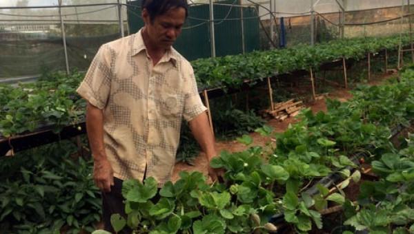 Tôi là nông dân 4.0: Lão nông làm vườn bằng... iPhone 7 Plus