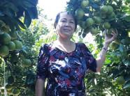 Chỉ với 1.000m2 trồng cam xoàn: Lãi 70 triệu/vụ, thu trái quanh năm